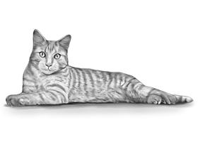 CAT 2B