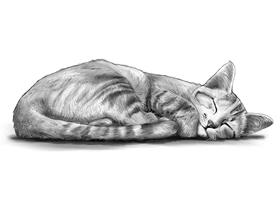 CAT 3A