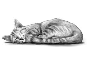 CAT 3B