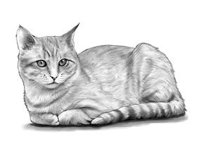 CAT 5A