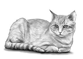 CAT 5B