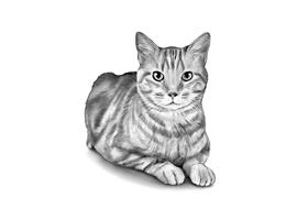 CAT 6B