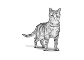 CAT 8A
