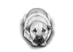 DOG 1A
