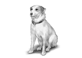 DOG 2A