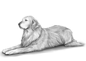 DOG 4A