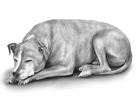 DOG 5A