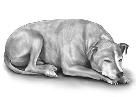 DOG 5B
