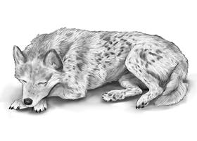 DOG 9A